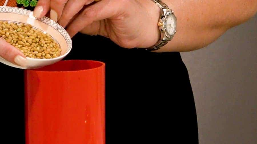 Pouring coriander seeds into coffee grinder