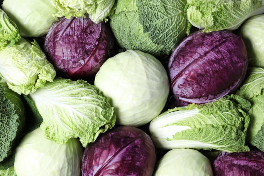 How To Cook Cabbage 20 Delectable Cabbage Recipes Twosleevers